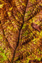 Leaf texture close up of on dry Royalty Free Stock Images