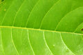 Leaf texture detailed of pattern Stock Photography