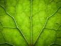 Leaf texture macro of green Stock Images