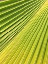 Leaf texture plam Royalty Free Stock Photos