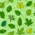 Leaf vector green leaves of trees leafed oak and leafy maple or leafing foliage illustration of leafage in spring set