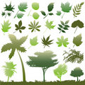 Leaf vector set Stock Photography