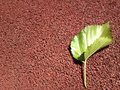 This leaf was so kind to let me take a picture Royalty Free Stock Photo