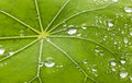Leaf water droplets background on a green Stock Images