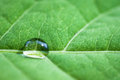 Leaf with water drops green macro shot shallow depth of field Royalty Free Stock Images