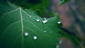Leaf with water drops Royalty Free Stock Photo