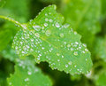 Leaf with water drops selective focus shallow depth of field Royalty Free Stock Images