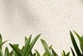 Leaf on white wall amaryllis leaf Stock Image