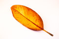 Leaf on a white yellow red Stock Photo