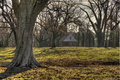 Leafless oak trees ranch williamsburg virginia early winter dawn Stock Photo