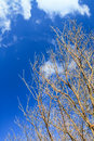 Leafless tree branches against blue sky background Stock Photography