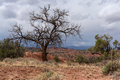 Leafless tree in capitol reef national park storm approaches Stock Image