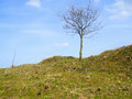 Leafless tree small bare on a top leading to the right green hill in front of blue sky cloud with scattered clouds Royalty Free Stock Image