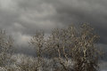 Leafless trees and grey clouds sky with on chrome natural background horizontal picture Royalty Free Stock Photo