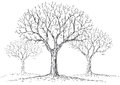 Leafless trees illustration of a in the fog Stock Images