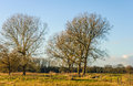 Leafless trees and many fences in a rural landscape Royalty Free Stock Photo