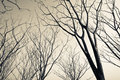 Leafless trees in monotone color Royalty Free Stock Image