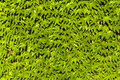 Leafs background wall covered with green Stock Photo