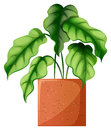 A leafy green ornamental plant illustration of on white background Stock Photo