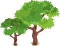 Leafy Green Trees