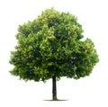 Caduco cal árbol
