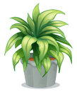 A leafy plant illustration of on white background Stock Image