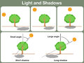 Leaning light and shadow for kids - Worksheet Royalty Free Stock Photo