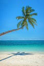 Leaning palm tree over a beach Royalty Free Stock Photo