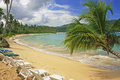 Leaning palm tree at rincon beach samana peninsula dominican republic Royalty Free Stock Photos
