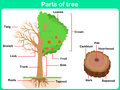 Leaning Parts Of Tree For Kids