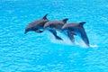 Skákajúci uhorka delfíny