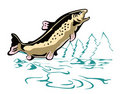 Leaping Brown Trout Royalty Free Stock Photo