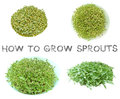 Learn how to grow sprouts at home step