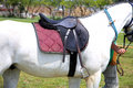 Leather saddle for equestrian sport on a back of a horse Royalty Free Stock Photo