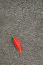 Leave on the ground outdoors photography of red autumn Stock Photo