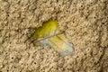 Leave in termites nest bardia nepal jungle Stock Image