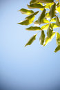 Leaves against the sky Royalty Free Stock Photography