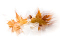 Leaves in autumn overlapping representing the ephemeral nature of existence Stock Image