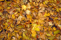 The leaves of autumn withered Royalty Free Stock Photo