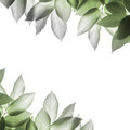 Leaves background green on white Stock Images