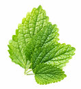 Leaves of balm three fresh Royalty Free Stock Images