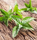 Leaves basil old wooden table Royalty Free Stock Images