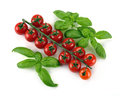 Leaves of basil and tomatoes cherry on a white background Royalty Free Stock Photos