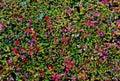 Leaves Berris Fall Colors