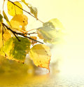 Leaves of birch and sunny day over water Royalty Free Stock Photos