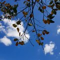 Leaves and branches against blue sky Royalty Free Stock Photo