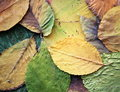 Leaves carpet Royalty Free Stock Photo