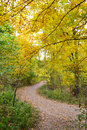 Leaves Changing Colors in Fall on a Walking Trail Royalty Free Stock Photo