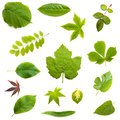 Leaves collection Royalty Free Stock Photos