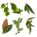 Leaves Collection isolated on White Royalty Free Stock Photo